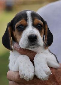 2021-09-09 Beagles M2860 1 Penny Batman (3).jpg