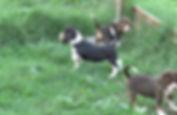 2020-05-06 Beagles F5969 3 Camo Buddy (1