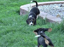 2020-05-06 Beagles F5976 Camo Buddy (9)_