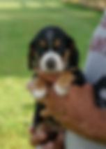 2019-09-02 Beagle 3491 3.JPG