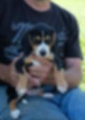 2019-09-30 Beagle F 3492 Maggie.JPG