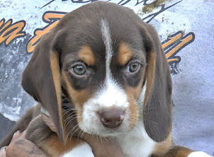 2020-05-06 Beagles M5974 Camo Buddy (8)_