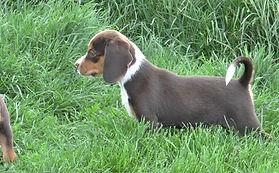 2020-05-06 Beagles M5974 Camo Buddy (9)_