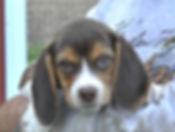 2020-05-06 Beagles M5975 Camo Buddy (4)_