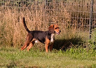 2018-06-26 Beagle Buddy_018 2.JPG