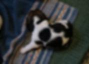 2020-05-07 Beagles F2 2 Penny Batman.jpg