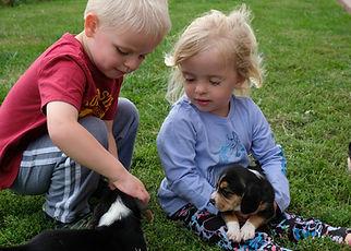 2020-09-27 Beagles Connor Mia Maggie Bud