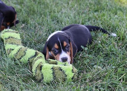 2021-06-13 Beagles M2843 Camo Buddy (21)