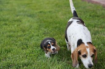 2021-06-02 Beagles M1 Camo Buddy (1).JPG