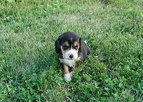 2019-09-02 Beagle 3497 5.JPG