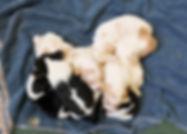 2020-05-07 Beagles Penny 2.jpg