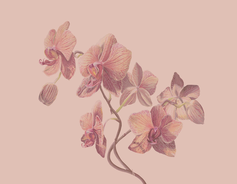Orchid Housekeeping