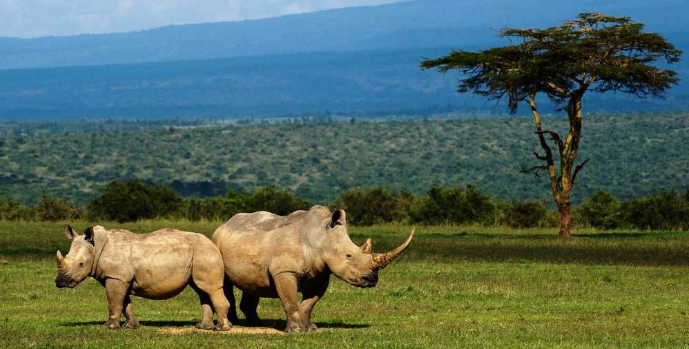Laikipia-Rhinos_edited.jpg