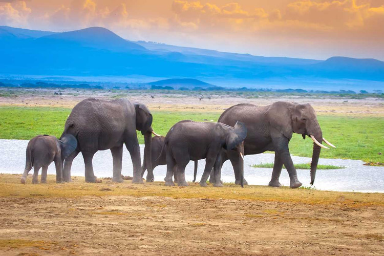Chobe National Park. Watering in the Oka