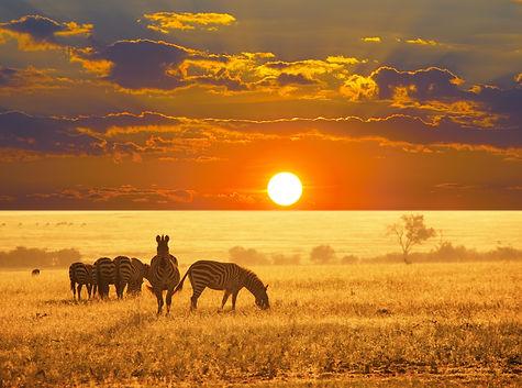 Etosha-National-Park3.jpg