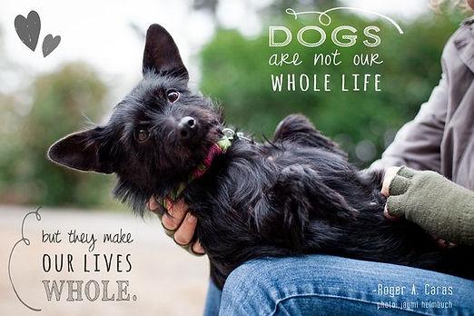 jaymi-heimbuch-dogs-our-life.jpg.653x0_q
