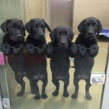 group pups.jpg