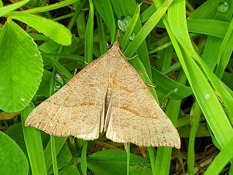 2019 moths