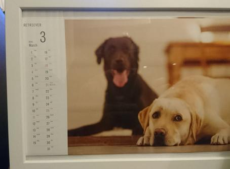 我が家の愛犬ハルとレク