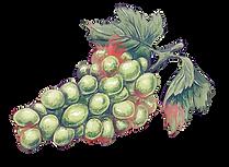 Verjus Berries