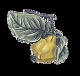 Frucht Quitte