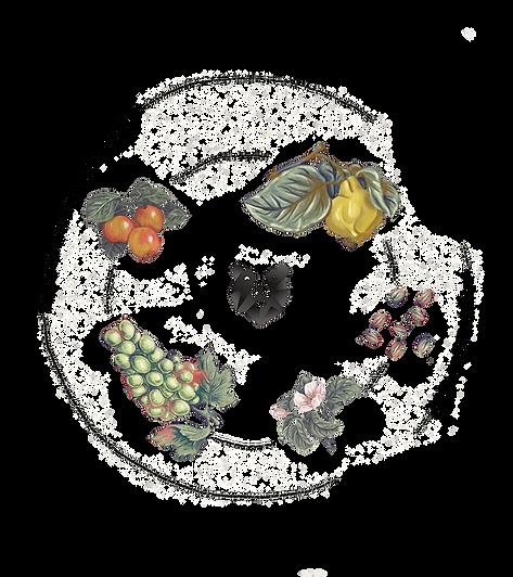 Abbildung der Zutaten des Bärnstein Quitte: Apfel, Quitte, Trauben des Verjus, grüner Kaffee / Rohkaffe