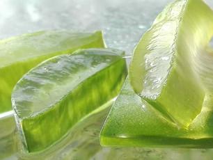 Aloe Vera: The Super Succulent