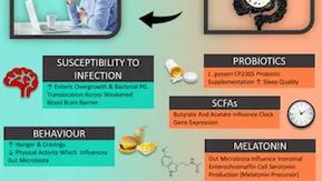Gut-microbiota around the clock