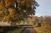 Cotswold lane near Chipping Campden