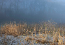Winter frost and misty woodland