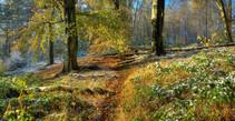 Cofton Woods, Worcestershire