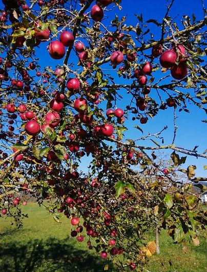 apples-selker-01.jpg