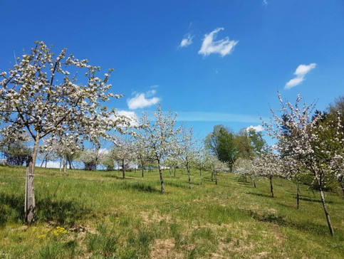 Bio Äpfel aus Selker