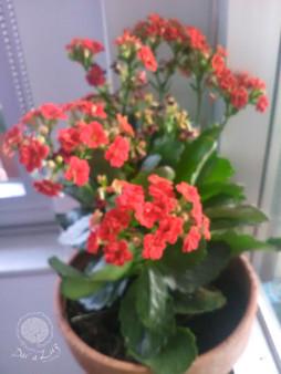 Dar a Luz en Casa Aborto Ana flores mace