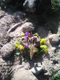 Dar a Luz en Casa Aborto Ana enterrado f
