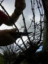 201307_Pruning Image_ed.jpg