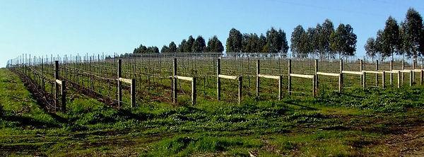 200607_after_pruning.jpg
