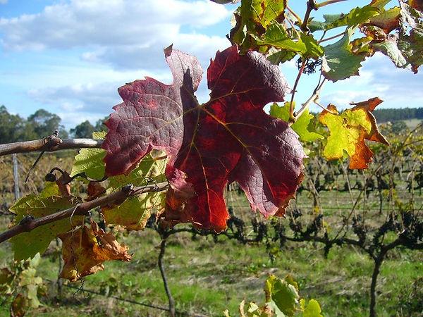 201204_rustling leaves.jpg