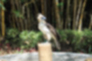 201504_Eagle.jpg