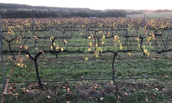 201805 Vines in slumber.jpg