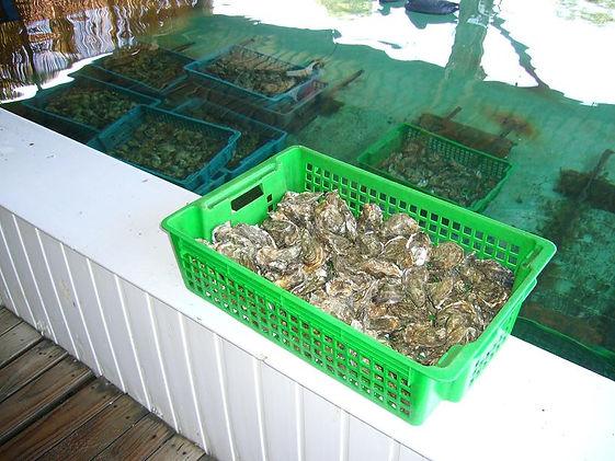 201010_Cape Ferrat Oysters.jpg