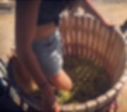 201811_Marsanne stomping.png
