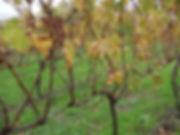 200804_Autumn Cab Franc 0408_resized.JPG