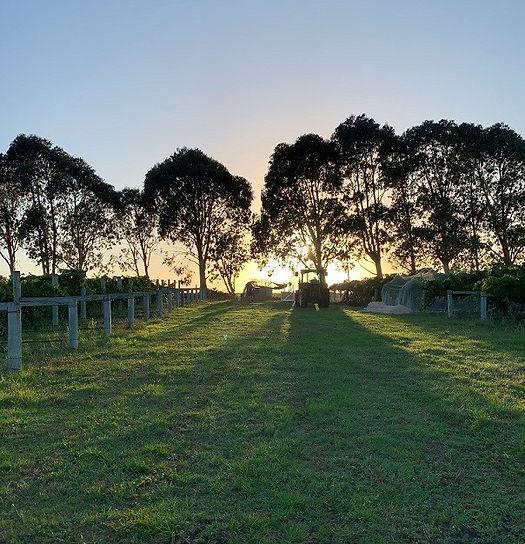 202102_Chardonnay vintage sunrise.jpg