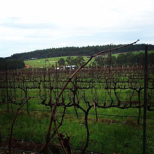 201506_Vines.JPG