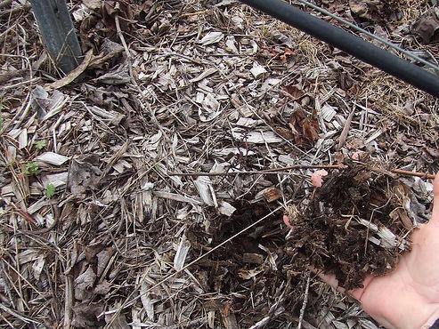 201007_Wood Chip Mulch - 080810.jpg