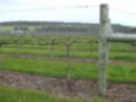 201007_Spur Pruning2 - 080810.jpg
