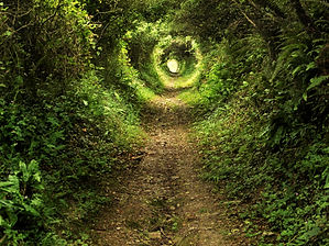 Tunnel -like path covered with bushes an