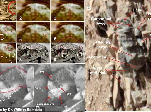Marte, l'annuncio dell'entomologo William Romoser: «Insetti e serpenti sul pianeta rosso»