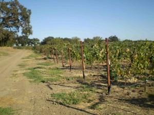 vineyard, wine
